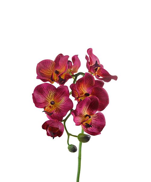 phaleno real fiori finti accessori casa we-shop