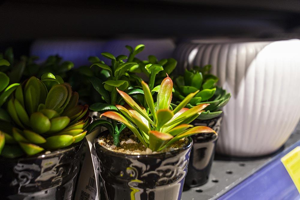 We Shop - Articoli per il fai da te, giardinaggio, piante finte